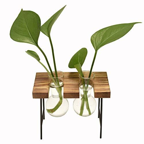 DEDC Jarrón de Cristal para Escritorio, con Soporte de Madera Maciza Retro para Plantas Hidropónicas, Jardín, Decoración de Bodas (2 Bombillas)
