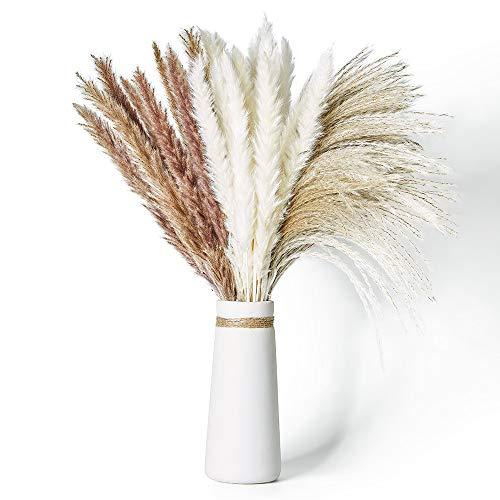 Janice Ky 60Pcs Pampa Seca Decoracion con 3 Tipos de Color Planta Boho...