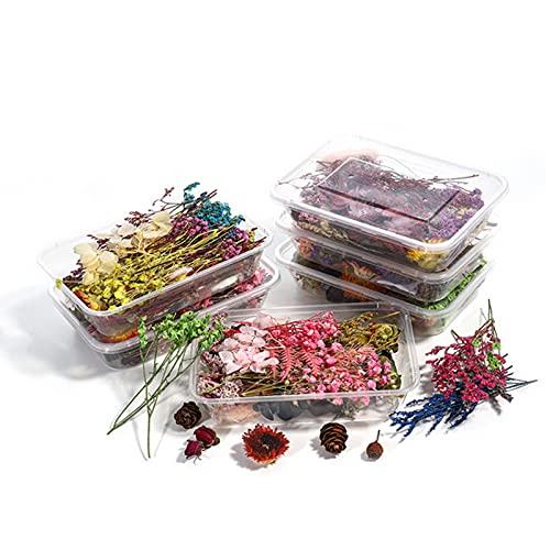 2 Cajas Flores Prensadas Secas, Flores Secas Naturales Decoración de...