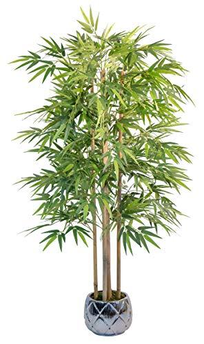 Maia Shop 1137 Bambú Cañas Naturales, Elaborados con los Mejores...