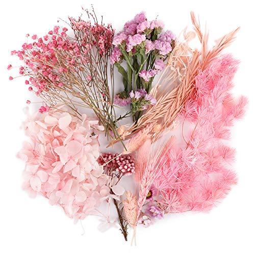 UFLF Flores Secas Preservadas, Flores Naturales Secas Reales con Caja...