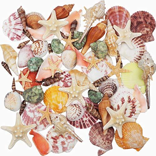 Conchas de mar Conchas de playa mixtas 9 clases 3-9 CM Conchas...