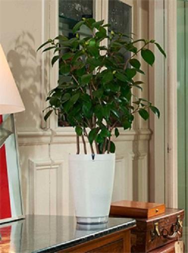 El Parrot Pot 2 es la solución definitiva a los problemas de riego.  Con una reserva de agua de 2,2 litros, esta sencilla maceta blanca de diseño distribuye el agua según las necesidades de la planta y el pedido que se esté realizando.  Por lo tanto, a través de una sencilla aplicación de teléfono inteligente, puede controlar de forma remota el riego de su planta para evitar que se seque.  No más sorpresas desagradables cuando regrese de las vacaciones, ¡sus plantas siempre estarán tan elegantes como cuando las dejó!