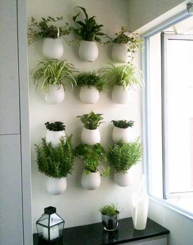 Las plantas aromáticas en macetas se unen a la pared contra un mueble de cocina para crear una pared verde.  Práctico y decorativo, aprovecha el espacio desperdiciado.