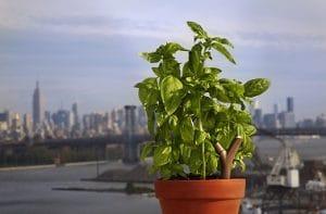 Pareciendo una pequeña rama casi a la altura de la planta, ¡el Flower Power lo tiene todo!  Plantado directamente en la tierra y alimentado por baterías, este objeto se conecta a través de Bluetooth 4.0.  De este modo, puede medir la temperatura ambiente, la luminosidad, así como las necesidades de fertilizantes y la humedad del suelo.  ¡Una innovación para mantener tus plantas en forma fácilmente!