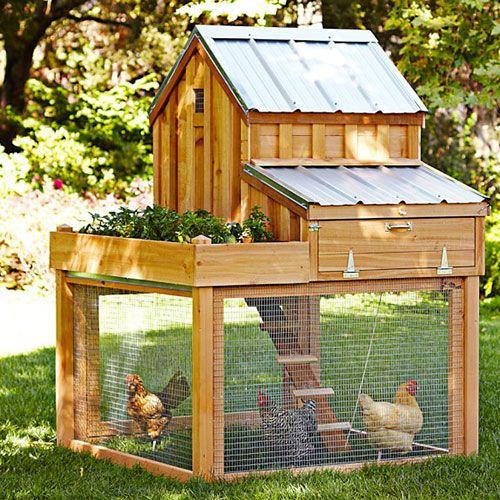 gallinero para 6 gallinas