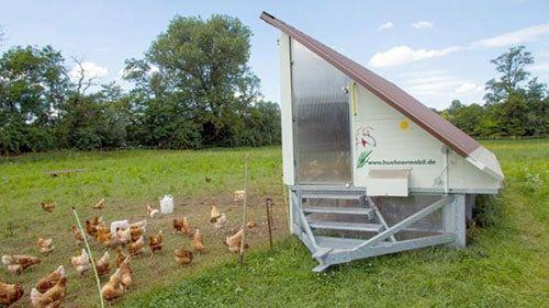 gallineros de jardín para gallinas y pollos
