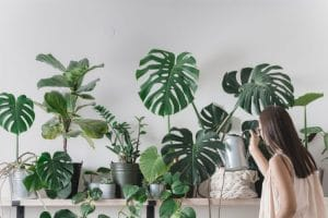 Guía para el cuidado de las plantas de interior