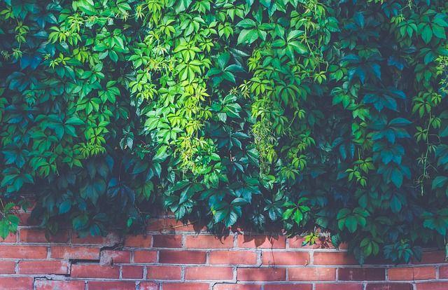 Grietas en la pared de ladrillo