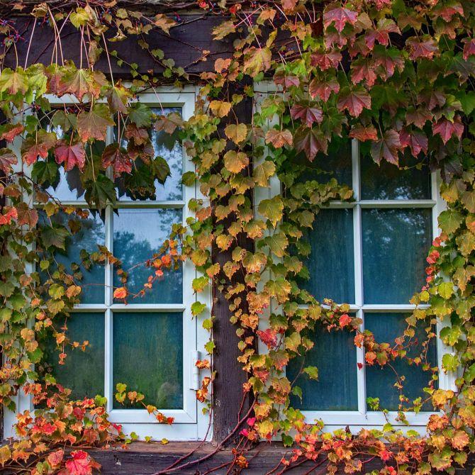 Ventanas cerradas en otoño_Submission