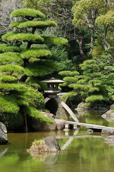 Los jardines zen son el hogar de especies que se pueden encontrar fácilmente en Europa, como el pino.  Estético y aromático, debe cortarse en armonía con las tradiciones japonesas.