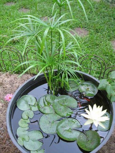 Un jardín zen generalmente alberga un estanque, una fuente o cualquier otra instalación que utilice agua.  Elija plantas adecuadas que crezcan en el agua para decorarlo.