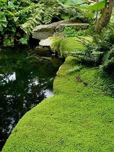 En un jardín zen que requería mucho trabajo, las malas hierbas no tienen cabida.  ¡Plantar plantas que cubran el suelo evita que la naturaleza se apodere!