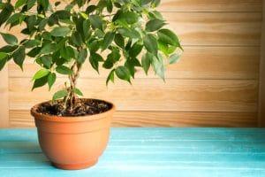 ¿Qué plantas elegir para poner en casa?